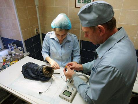 BAER-тест: подготовка к процедуре